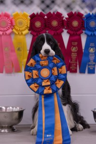 Gunner holding his HIT ribbon from Nationals