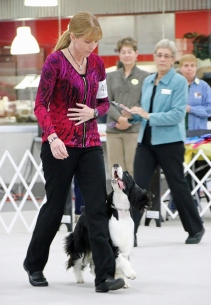 Heeling at the 2014 ESSFTA National Specialty